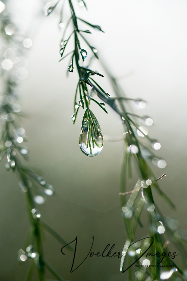 Dew drops 01