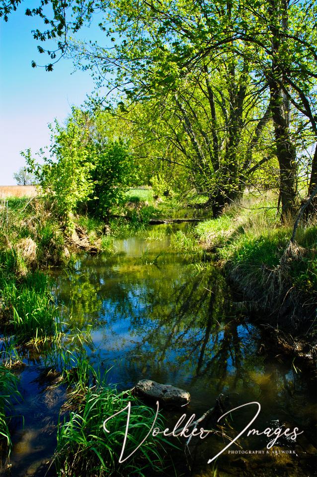 Creek & Trees 01